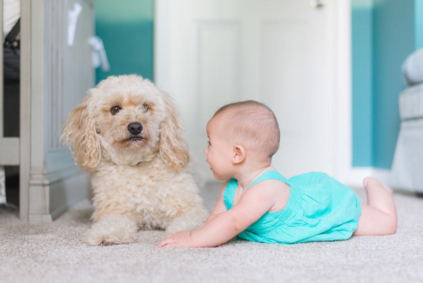 Virtual Pets – How Come Virtual Pets Very Popular?